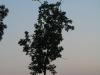 Pflanzen-Baum-Silhouette-Foto_Textur_B_03480