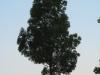Pflanzen-Baum-Silhouette-Foto_Textur_B_03490
