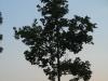 Pflanzen-Baum-Silhouette-Foto_Textur_B_03500