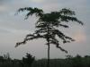 Pflanzen-Baum-Silhouette-Foto_Textur_B_03510