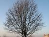 Pflanzen-Baum-Silhouette-Foto_Textur_B_11990