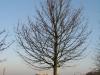 Pflanzen-Baum-Silhouette-Foto_Textur_B_12030