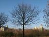 Pflanzen-Baum-Silhouette-Foto_Textur_B_12340