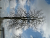 Pflanzen-Baum-Silhouette-Foto_Textur_B_41080