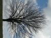 Pflanzen-Baum-Silhouette-Foto_Textur_B_41120