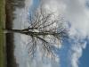 Pflanzen-Baum-Silhouette-Foto_Textur_B_41130