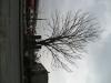 Pflanzen-Baum-Silhouette-Foto_Textur_B_43000