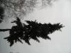 Pflanzen-Baum-Silhouette-Foto_Textur_B_43010