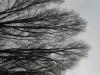 Pflanzen-Baum-Silhouette-Foto_Textur_B_43140
