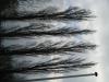 Pflanzen-Baum-Silhouette-Foto_Textur_B_43160