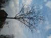 Pflanzen-Baum-Silhouette-Foto_Textur_B_43230