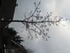 Pflanzen-Baum-Silhouette-Foto_Textur_B_43300