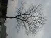 Pflanzen-Baum-Silhouette-Foto_Textur_B_43520
