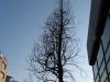 Pflanzen-Baum-Silhouette-Foto_Textur_B_46840