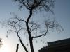 Pflanzen-Baum-Silhouette-Foto_Textur_B_46990