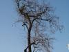 Pflanzen-Baum-Silhouette-Foto_Textur_B_47010