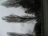 Pflanzen-Baum-Silhouette-Foto_Textur_B_5691