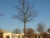 Pflanzen-Baum-Silhouette-Foto_Textur_B_P1109026