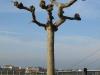 Pflanzen-Baum-Silhouette-Foto_Textur_B_P1179328
