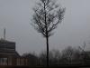 Pflanzen-Baum-Silhouette-Foto_Textur_B_P2280897