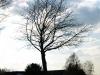 Pflanzen-Baum-Silhouette-Foto_Textur_B_P4171325