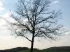 Pflanzen-Baum-Silhouette-Foto_Textur_B_P4171328