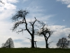 Pflanzen-Baum-Silhouette-Foto_Textur_B_P4201546