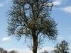 Pflanzen-Baum-Silhouette-Foto_Textur_B_P4201548