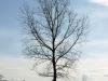 Pflanzen-Baum-Silhouette-Foto_Textur_B_P4201559