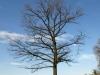 Pflanzen-Baum-Silhouette-Foto_Textur_B_P4201570