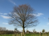 Pflanzen-Baum-Silhouette-Foto_Textur_B_P4201572