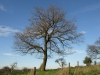 Pflanzen-Baum-Silhouette-Foto_Textur_B_P4201573