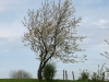Pflanzen-Baum-Silhouette-Foto_Textur_B_P4261817