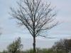 Pflanzen-Baum-Silhouette-Foto_Textur_B_P4261825