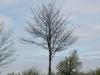 Pflanzen-Baum-Silhouette-Foto_Textur_B_P4261826