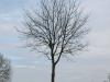Pflanzen-Baum-Silhouette-Foto_Textur_B_P4261830