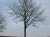 Pflanzen-Baum-Silhouette-Foto_Textur_B_P4261833