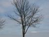 Pflanzen-Baum-Silhouette-Foto_Textur_B_P4261837