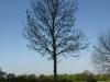 Pflanzen-Baum-Silhouette-Foto_Textur_B_P5032329
