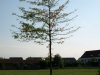 Pflanzen-Baum-Silhouette-Foto_Textur_B_P5142789