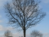 Pflanzen-Baum-Silhouette-Foto_Textur_B_PC137648