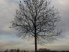 Pflanzen-Baum-Silhouette-Foto_Textur_B_PC147675
