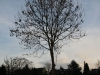 Pflanzen-Baum-Silhouette-Foto_Textur_B_PC147683