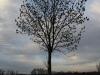 Pflanzen-Baum-Silhouette-Foto_Textur_B_PC147692
