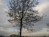 Pflanzen-Baum-Silhouette-Foto_Textur_B_PC147695