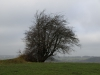 Pflanzen-Baum-Silhouette-Foto_Textur_B_PC238029