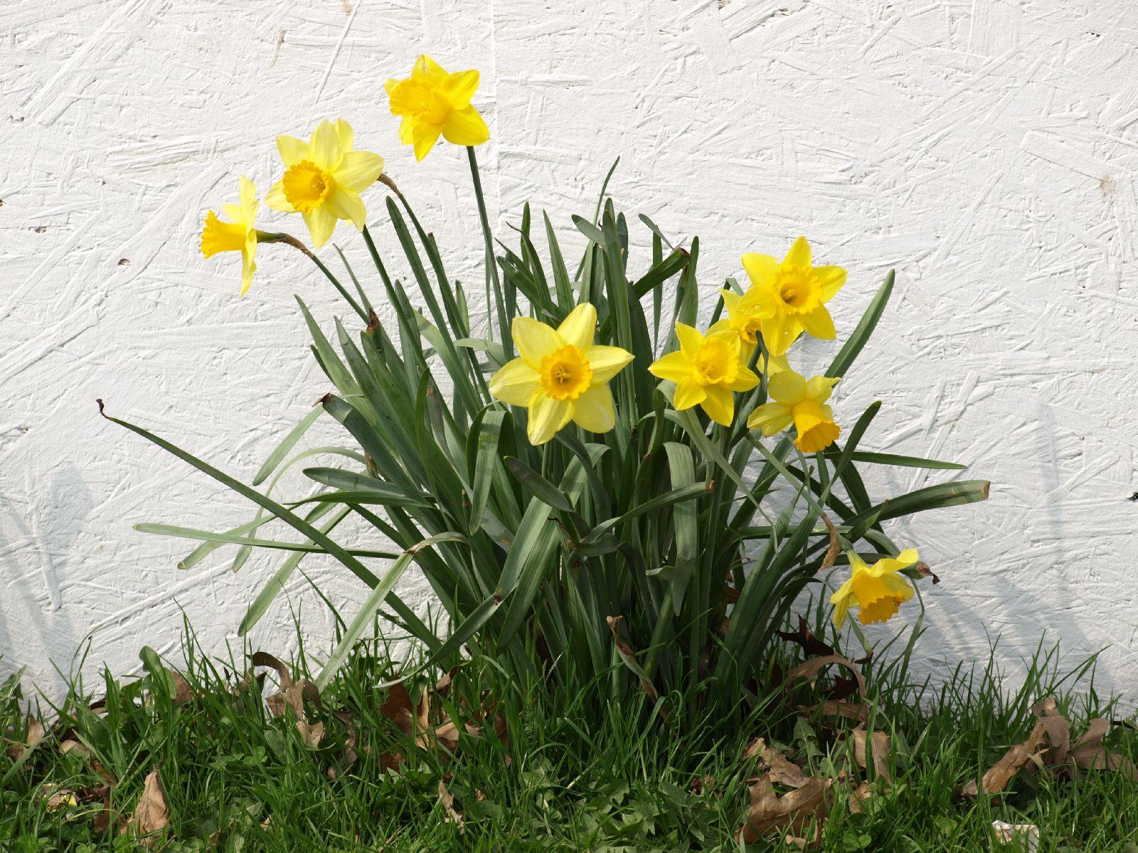 Pflanzen-Blumen-Foto_Textur_B_P4041563