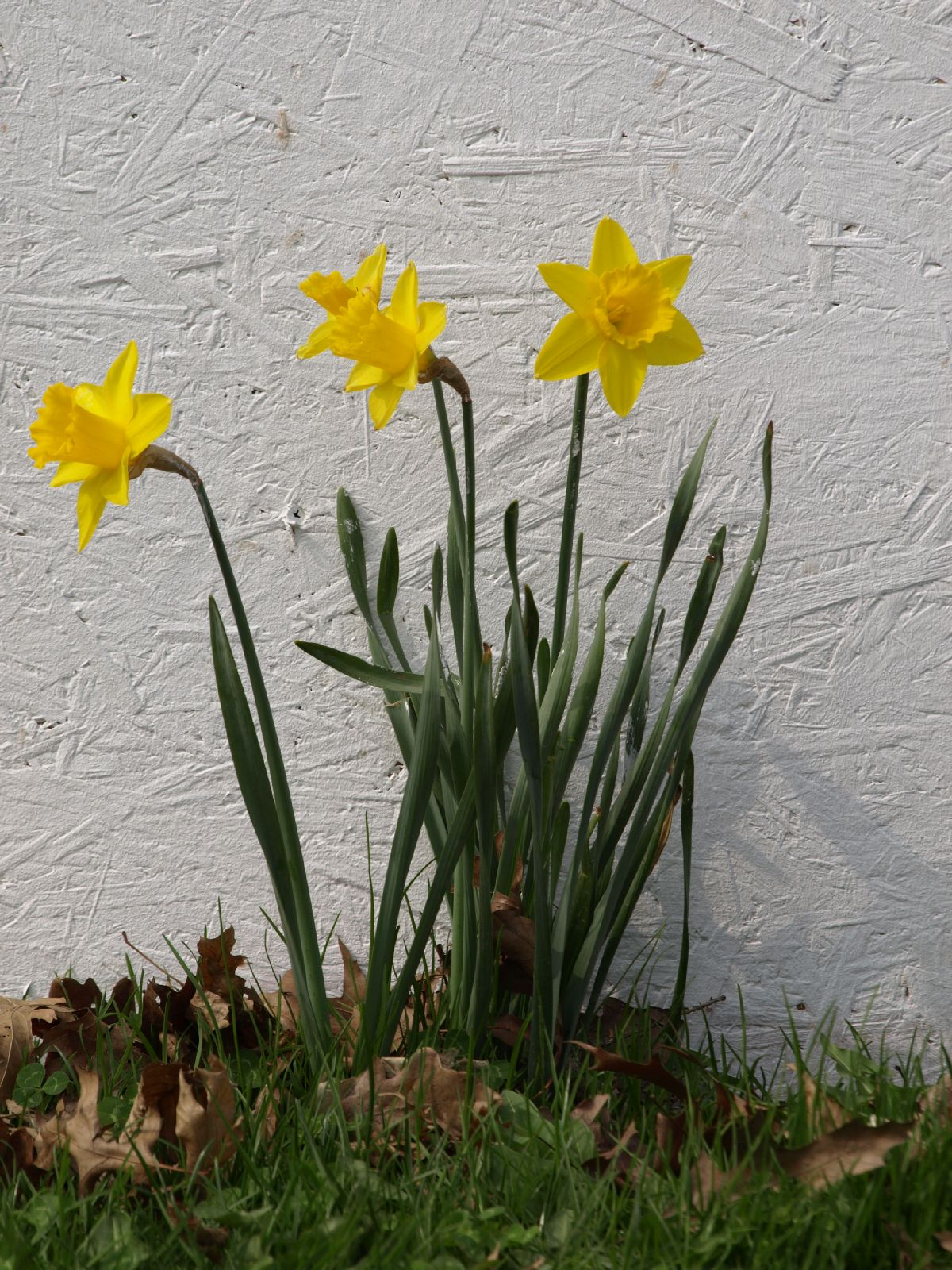 Pflanzen-Blumen-Foto_Textur_B_P4041564