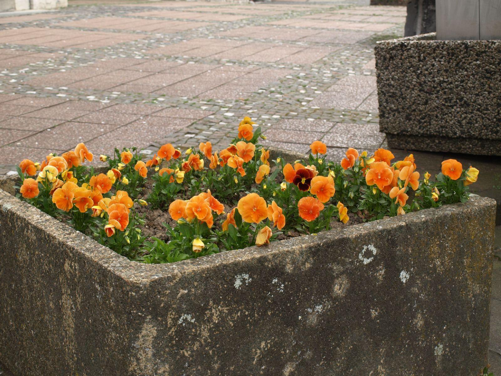 Pflanzen-Blumen-Foto_Textur_B_P4222556