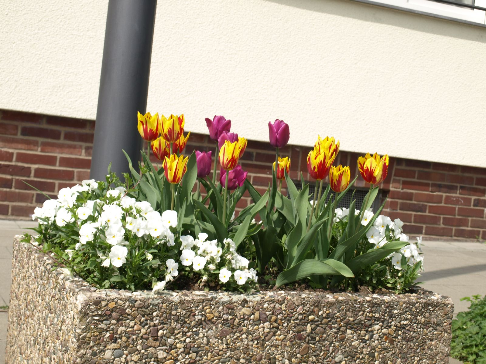 Pflanzen-Blumen-Foto_Textur_B_P4222623